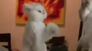 Смешные кошки - подборка 2013-2014