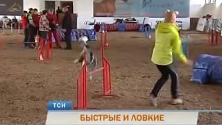 Быстрые и ловкие: в Перми прошёл отбор на чемпионат мира по аджилити
