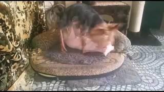 Собака девочка мальчик кот