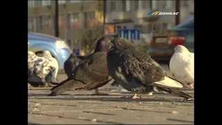 ТК Донбасс - НЛО против птиц