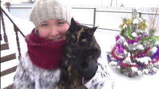 Немного Новогоднего настроения! Мейн-куны. Красноярск.