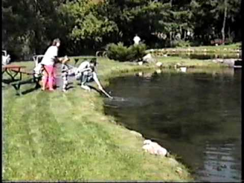 Family fishing at star prairie trout farm wi aug 14 1994 youtube - Trout farming business family mountains ...
