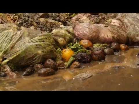 Food Waste - by Curiosity Quest