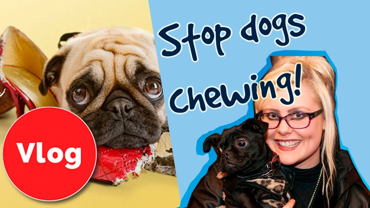 how to keep my dog from chewing