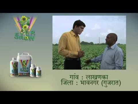 evergrow hindi final