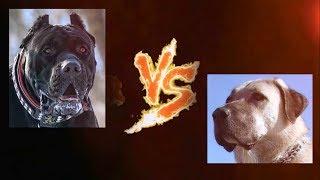Torneo Perruno 16-16. Presa Canario vs Kangal. LA FINAL.