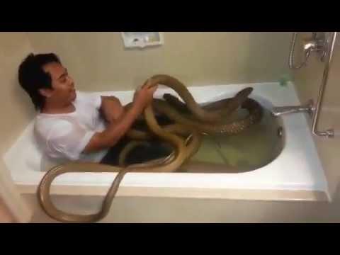 Sốc với video tắm chung với rắn hổ mang chúa