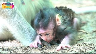 Poor newborn Alizza try stand to walk step by step | Mom carry & hug baby so love |Monkey Daily 3388 thumbnail