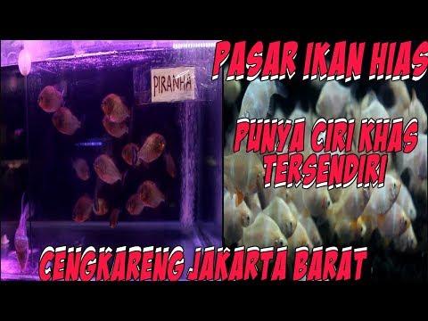 Pasar Modern Ikan Hias Cengkareng - Jakarta Barat | Murah Murah Dan Berkualitas