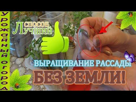 Сельдерей салат помидоры
