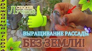 ОТЛИЧНЫЙ СПОСОБ ВЫРАЩИВАНИЯ РАССАДЫ!!! БЕЗ ЗЕМЛИ!(СМОТРИТЕ ТАК ЖЕ!!!! https://youtu.be/TEWTY_e5CeI - ▻РАССАДА ПРЯНЫХ ТРАВ БЕЗ ЗЕМЛИ! https://youtu.be/RHtlgofxtDs - ▻РАССАДА КАБАЧКА..., 2016-02-18T15:21:07.000Z)