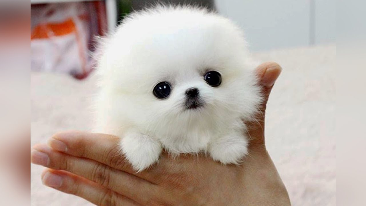 tiniest dog breed