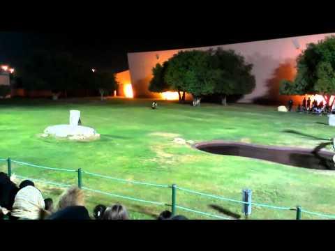 Al Ain Zoo Bird Show