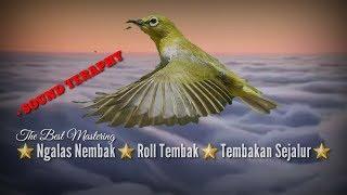 Best mastering pleci nembak sejalur||sound teraphy