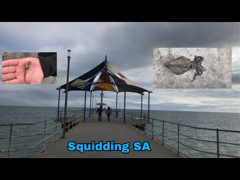 Squidding In SA, Brighton Jetty Catch And Cook