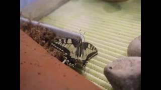 Редкие виды бабочек в гродненском зоопарке