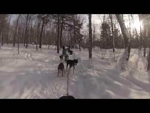 Dog Sledding - Chocpaw - January 2015