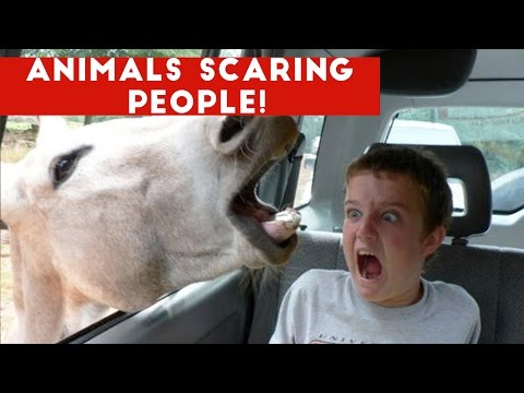 Thumbnail: Funniest Animals Scaring People Reactions of 2016 Weekly Compilation | Funny Pet Videos