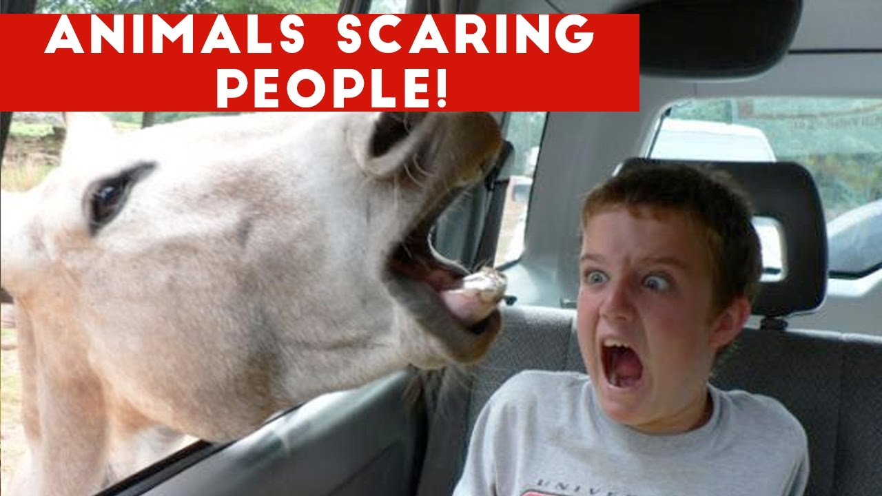 Funniest Animals Scaring Folks Reactions of 2016 Weekly Compilation | Humorous Pet Movies