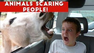Download Funniest Animals Scaring People Reactions of 2018 Weekly Compilation | Funny Pet Videos Mp3 and Videos