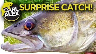 MYSTERIOUS fish we DIDN'T expect to be catching! - Creek / River Fishing