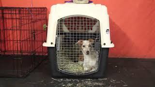 Dog Training | Charlotte's crate anxiety | Solid K9 Training Dog Training