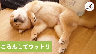 via YouTube@shibainu shiro suki https://www.youtube.com/user/wetti...