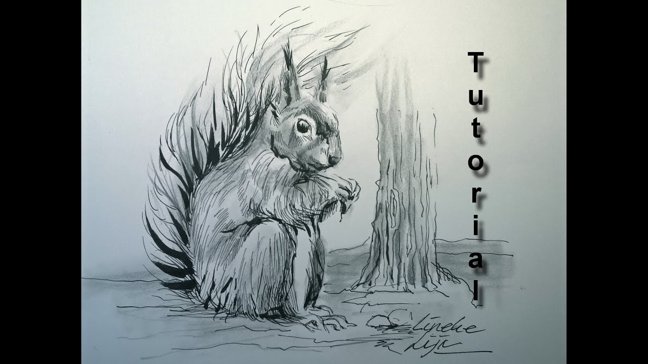 drawing a furry squirrel in pencil and ink easy tutorial youtube