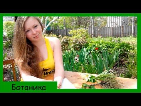 Декоративные вечнозеленые растения и кустарники для сада