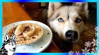 DIY TREATS PEANUT BUTTER PIE FOR DOGS  | Snow Dogs Snacks 55 | DIY Dog Treats Birthday Pie