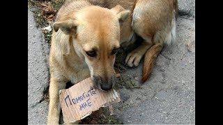 Помощь бездомным животным // Расклейка // Поездка и раздача на выставке