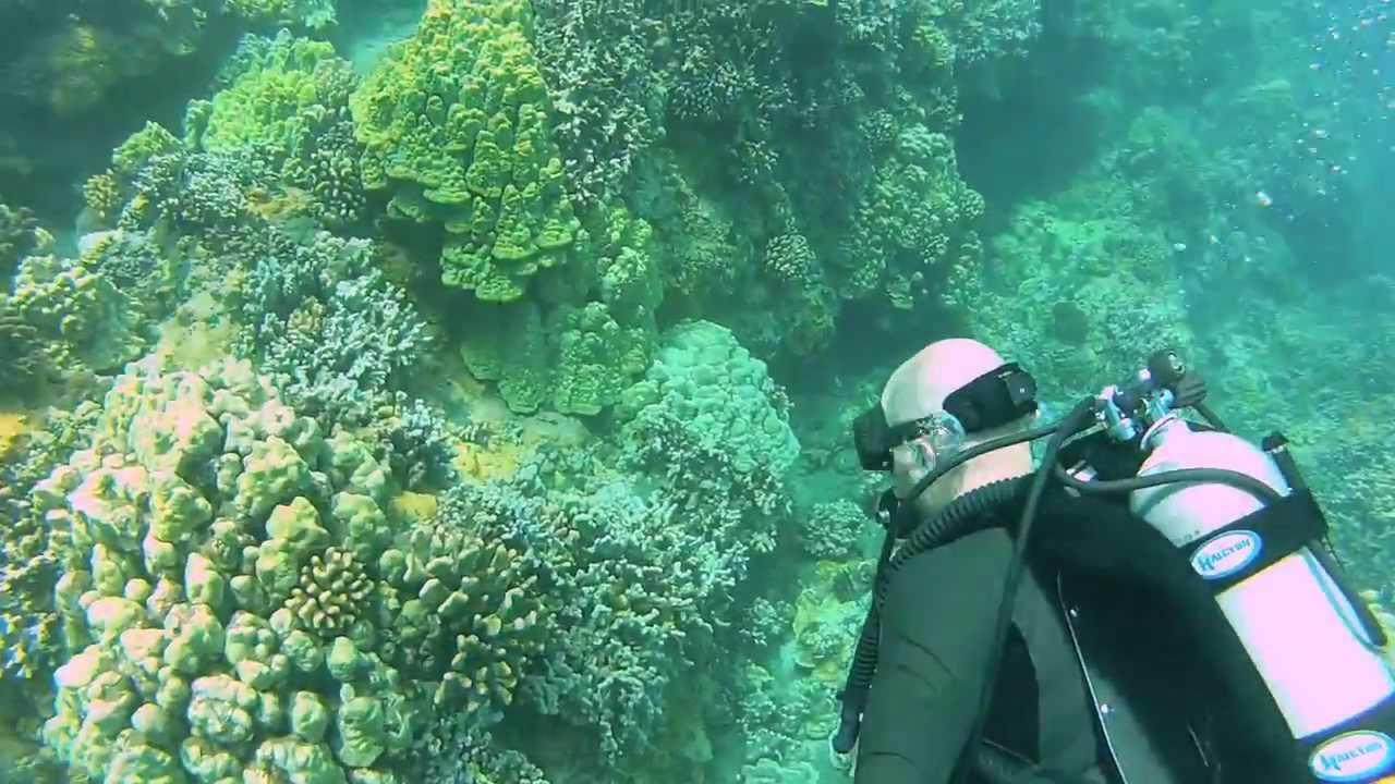 SCUBA Adventure With Lahaina Divers- Maui, Hawaii