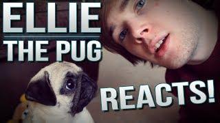 Ellie The Pug Reacts.. | Tdm Vlogs Episode 26