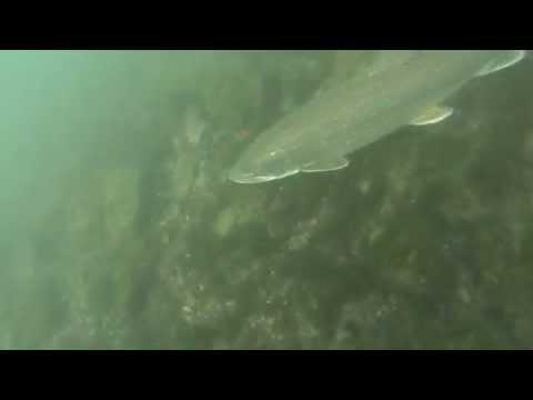 Lower niagara river scuba dive at artpark part-2