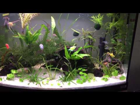 47 Gallon Planted Tank | Fluval Vicenza 180