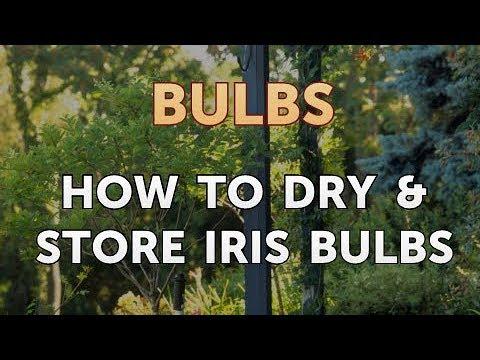 How To Dry Iris Bulbs You