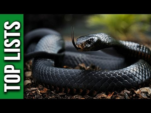 5 Most Venomous Snakes