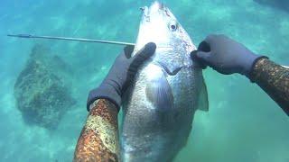 junio variado-17 (pesca submarina) Fuerteventura-spearfishing