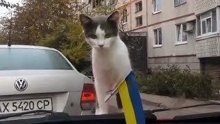 Funny road accidents,Funny Videos, Funny People, Funny Clips, Epic Funny Videos Part 13