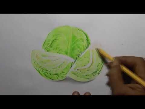 Time Lapse Cara Menggambar Sayur Kol Hijau Youtube