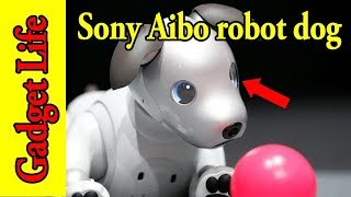Sony's Aibo robot dog is back with AI smarts and it's cuter than ever - Gadget Life