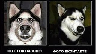 Самые смешные приколы с животными октябрь 2016 (2)The most funny jokes with animals October 2016 (2)