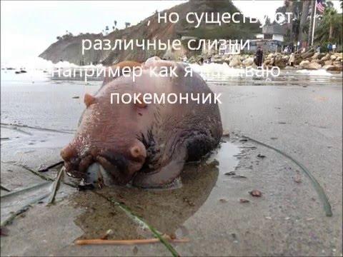 Бассейн Октябрь Фитнес клуб Энигма Бассейны Москвы