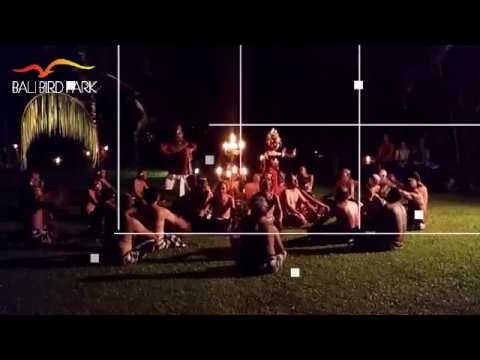Bali Bird Park - Special private event kecak dance