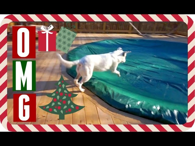 ROSE JUMPED IN THE POOL. Vlogmas Day 15! | Casey Holmes