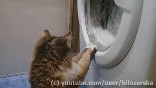 Буся-Бусеня-Бусоль опановує пральну машину :)