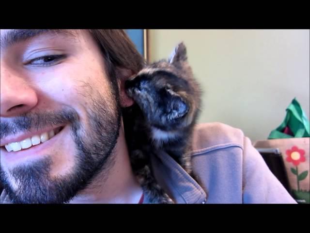Kitty kisses