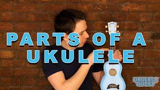 Parts of a Ukulele