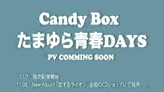 11/28発売Candy Box 6th mini Album「恋するライオン」より、先行配信決...