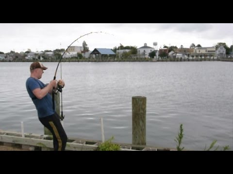 Saltwater Fishing From Shore - How To Catch Stingrays And Sharks
